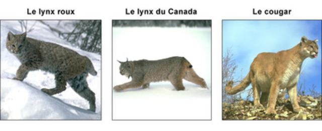 cougar rencontre qc