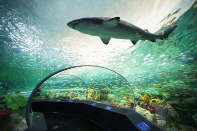 Shark exhibit - Ripley's Aquarium Canada