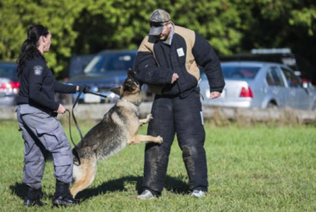 Dog Training Chatham Ontario