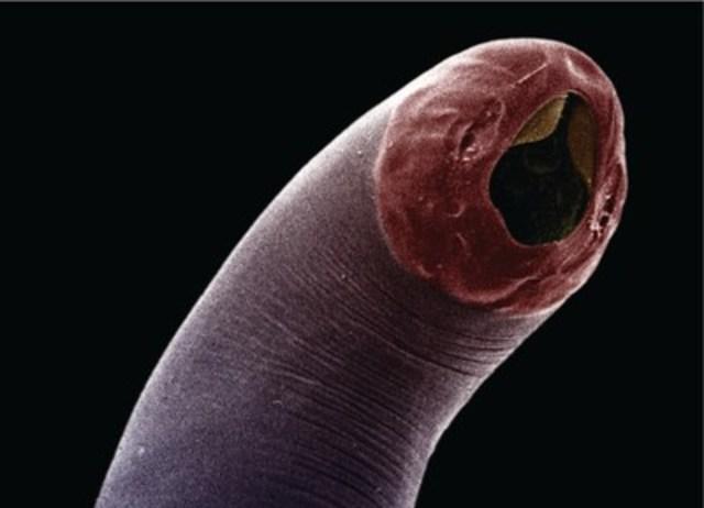 Pourquoi les virus appellent comme les parasites du niveau génétique